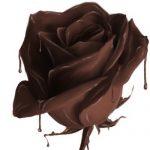 chocolate-rose