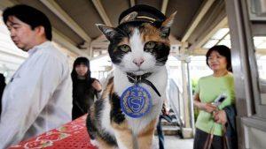 Japanese station master 'Tama', the cat, dies
