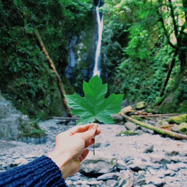 Photo Courtesy: Goldstream Provincial Park in Victoria by @ldl_jr via Instagram