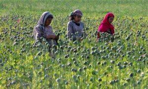 Punjab to approach Madhya Pradesh High Court for opium ban