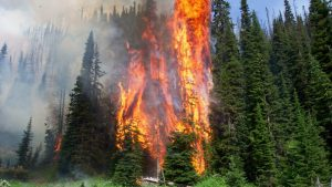wildfire-forest-fire-full-width-nature