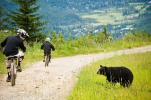 Whistler bear viewing tours
